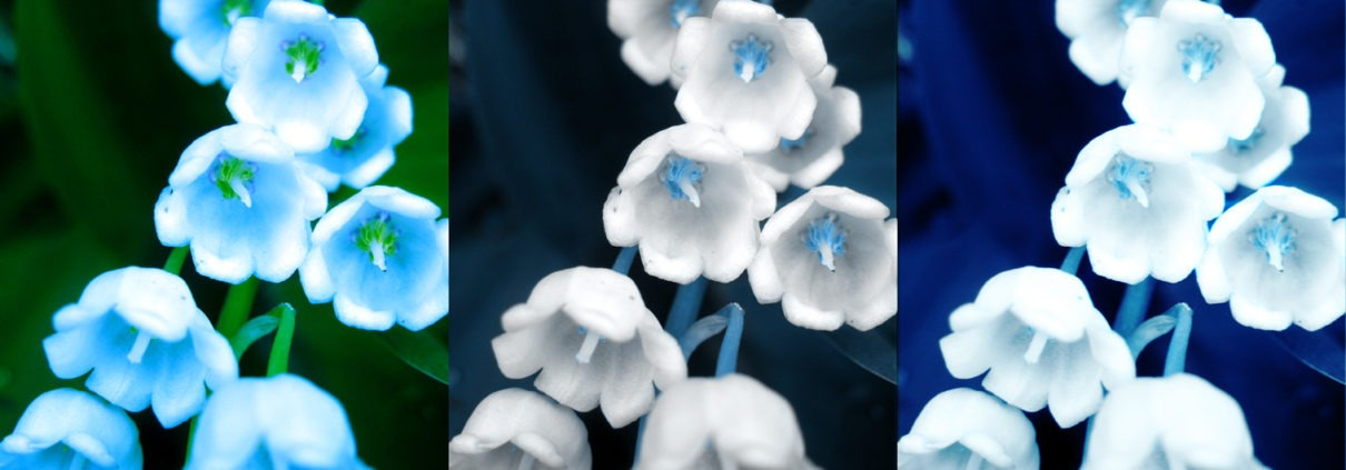 Triptyque Muguet bleu